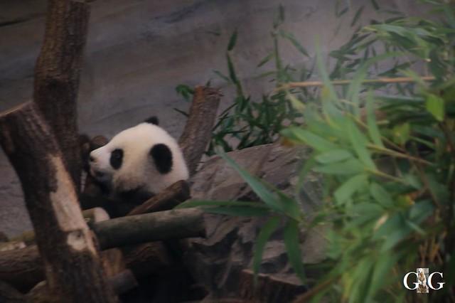 Besuch Zoo Berlin 01.02.202025
