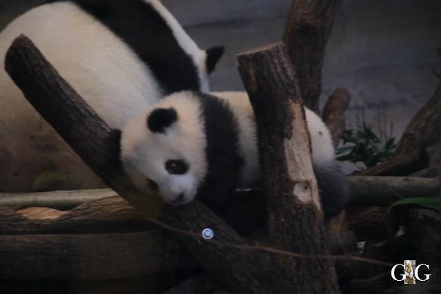 Besuch Zoo Berlin 01.02.20208