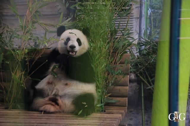 Besuch Zoo Berlin 01.02.20202