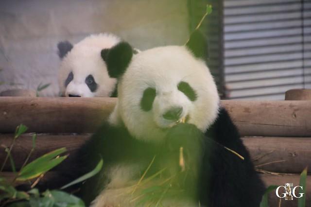 Besuch Zoo Berlin 01.02.202031