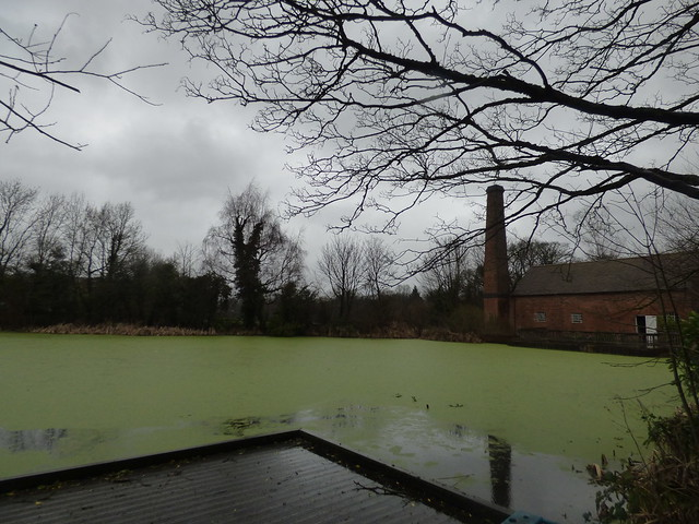 Sarehole Mill during Storm Dennis - Algae in the Mill Pool again