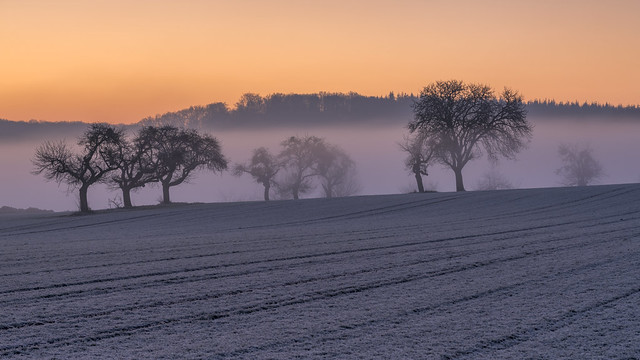 *Ein kalter Februarmorgen im Wittlicher Tal II*