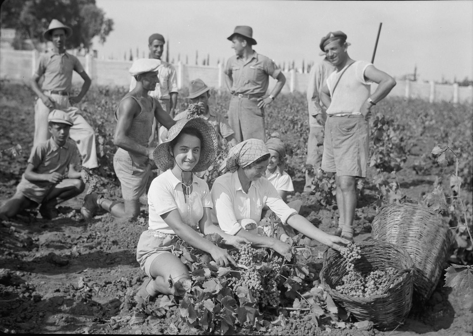 10. Группа сборщиков винограда и военнизированная охрана