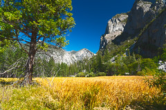 Zumwalts Meadow; Kings Canyon National Park