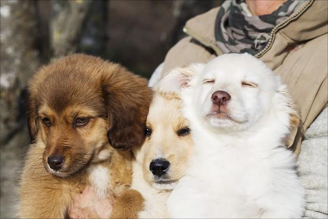 cuccioli!