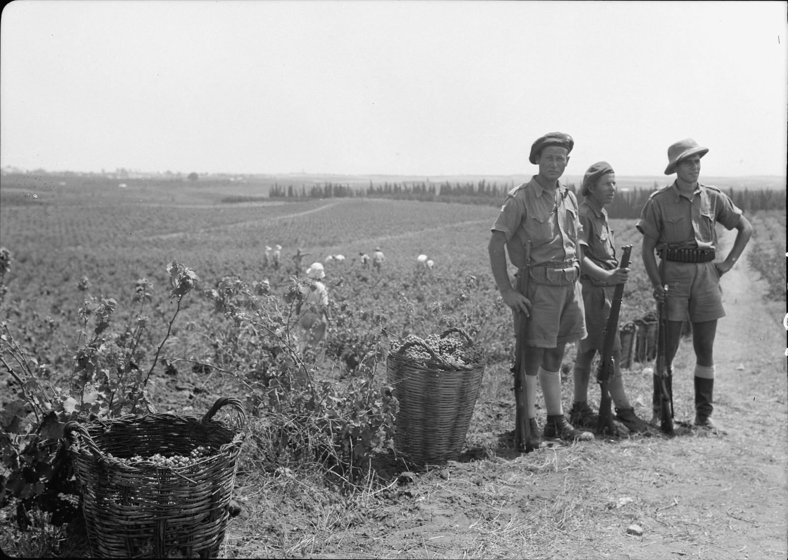 15. Еврейская военнизированная охраня охраняет сборщиков винограда