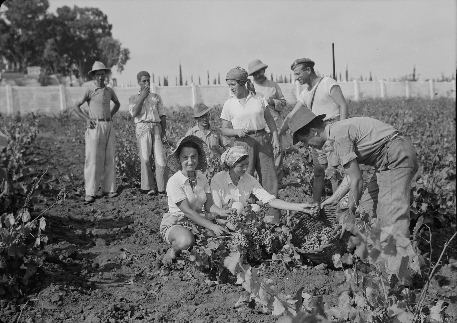 09. Группа сборщиков винограда и военнизированная охрана