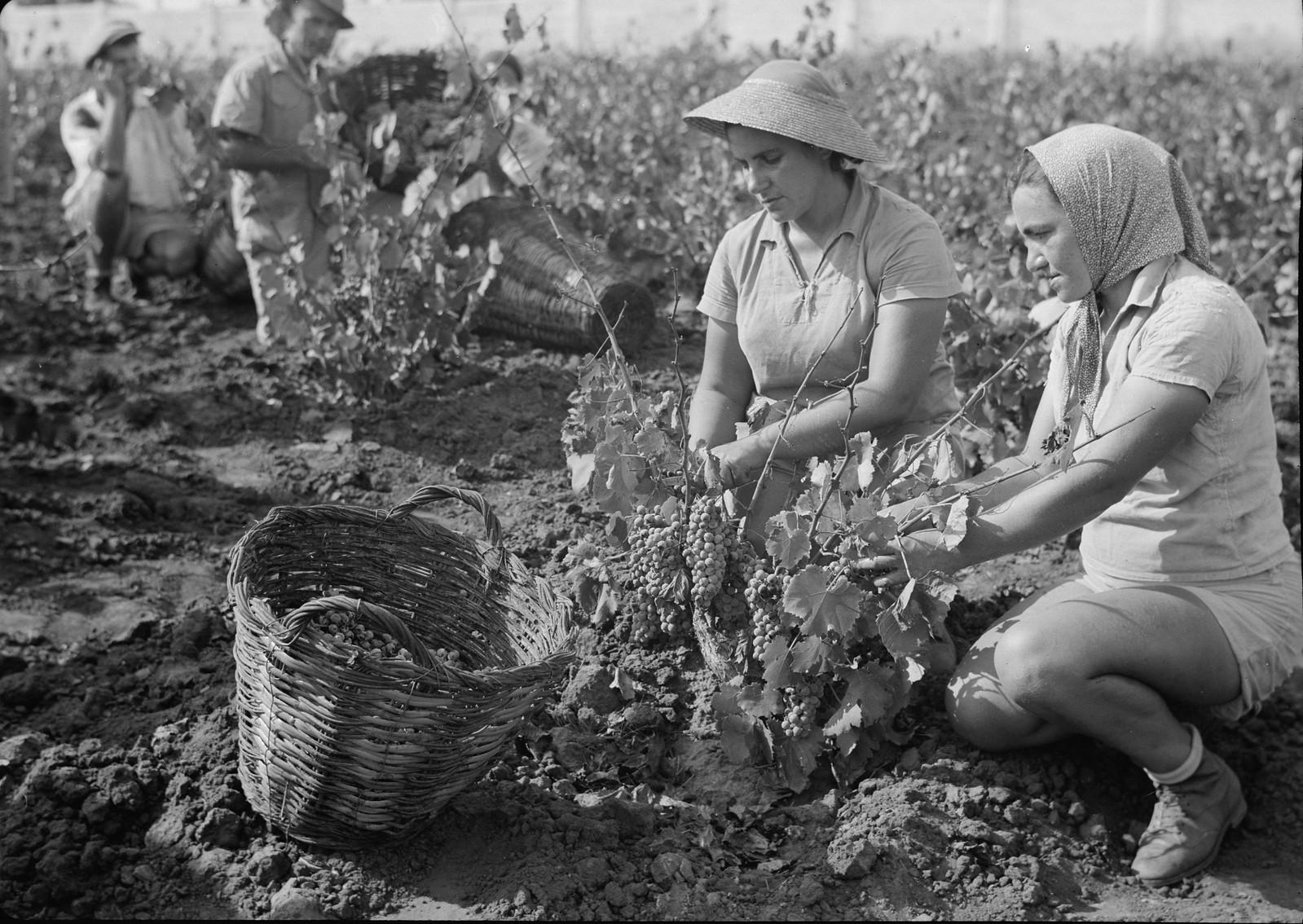 04. Группа сборщиков винограда