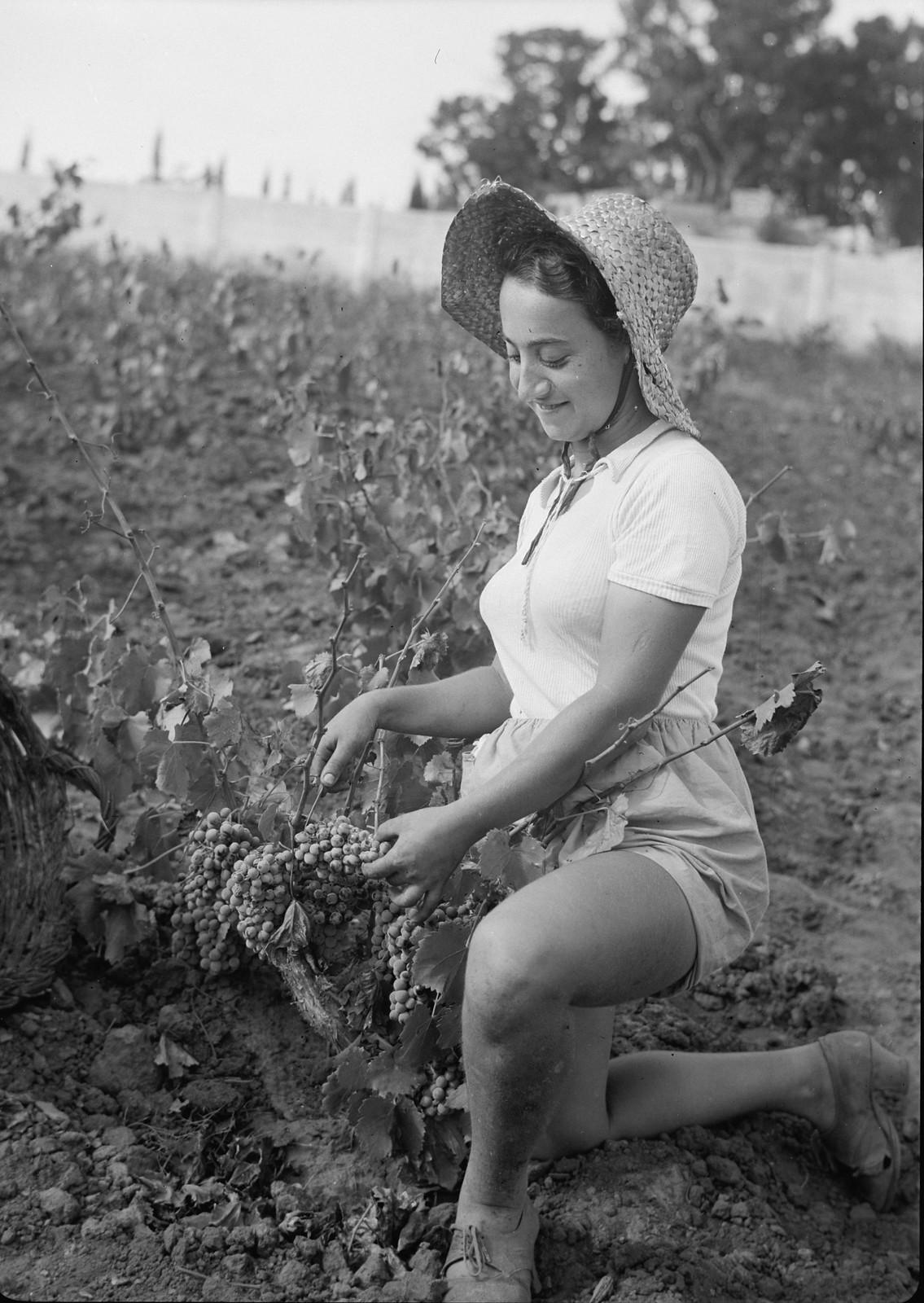 03. Сборщица винограда, европейская девушка-иммигрантка2