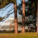 The Palm House, Sefton Park