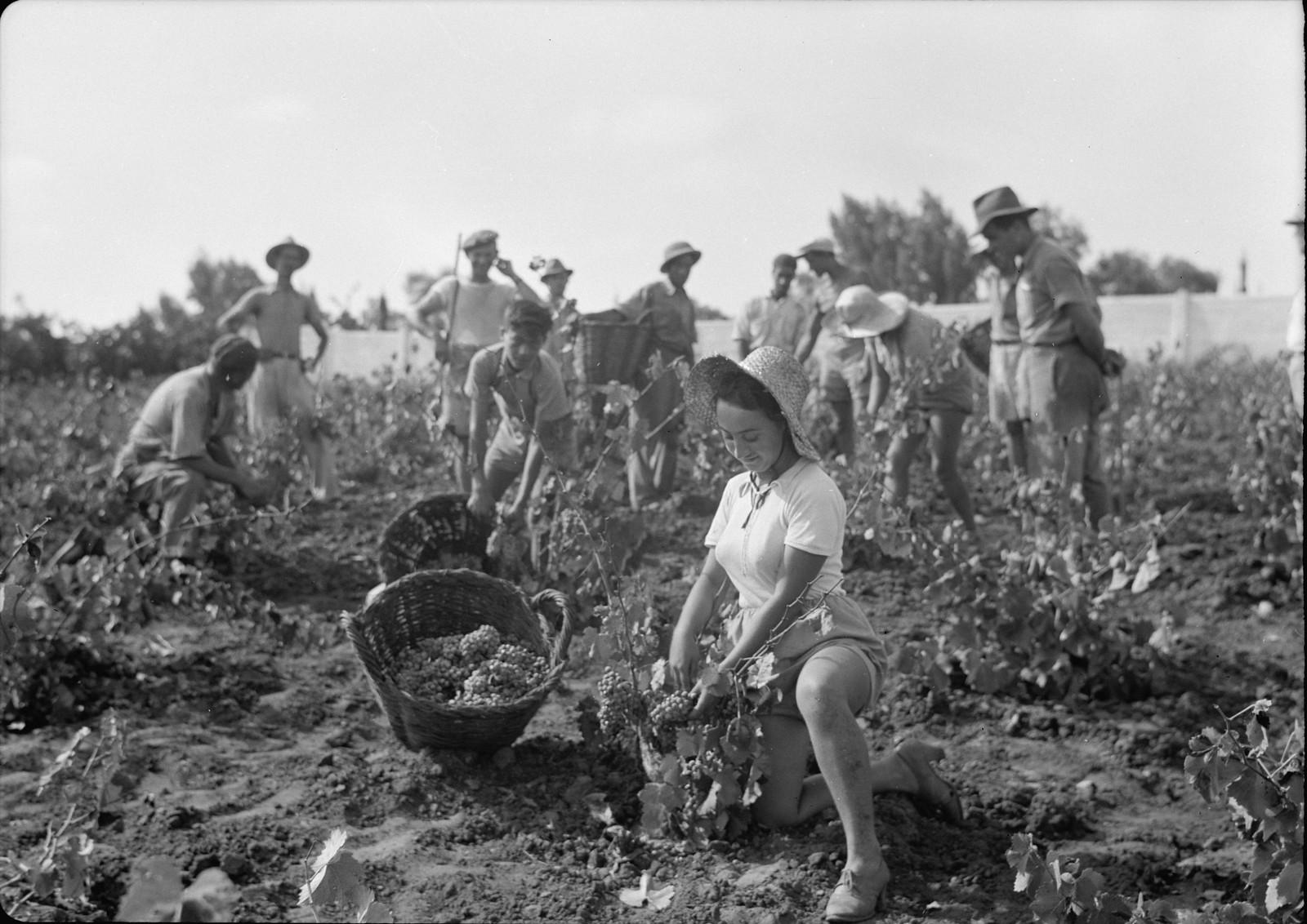 08. Группа сборщиков винограда и военизированная охрана