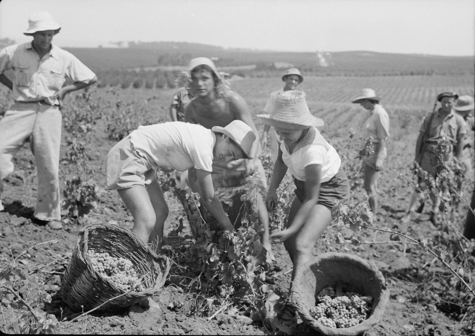 07. Группа сборщиков винограда