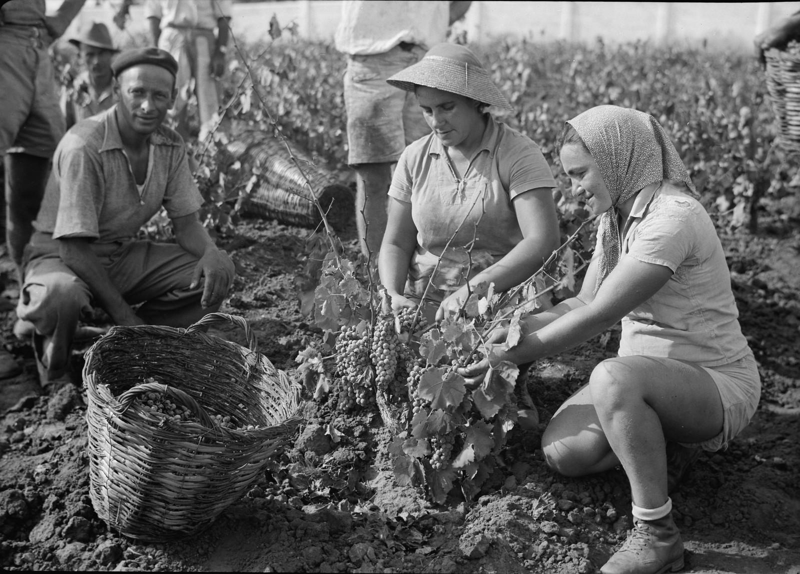 06. Группа сборщиков винограда