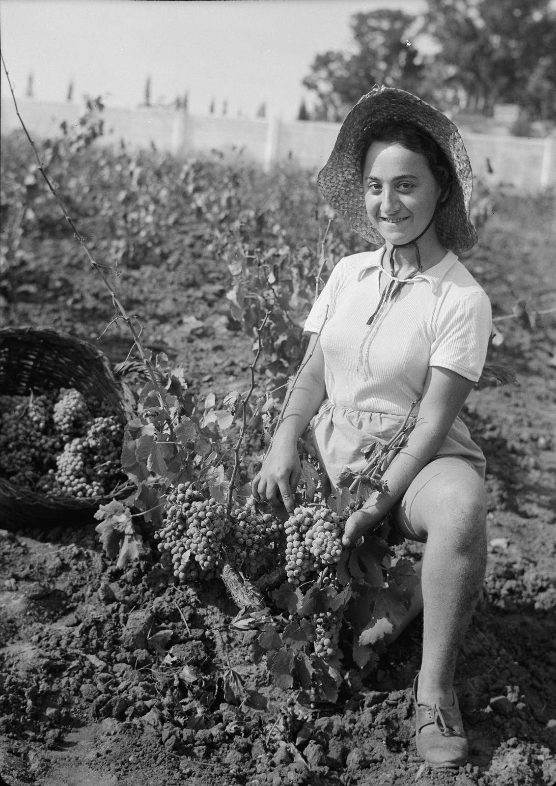 02. Сборщица винограда, европейская девушка-иммигрантка1