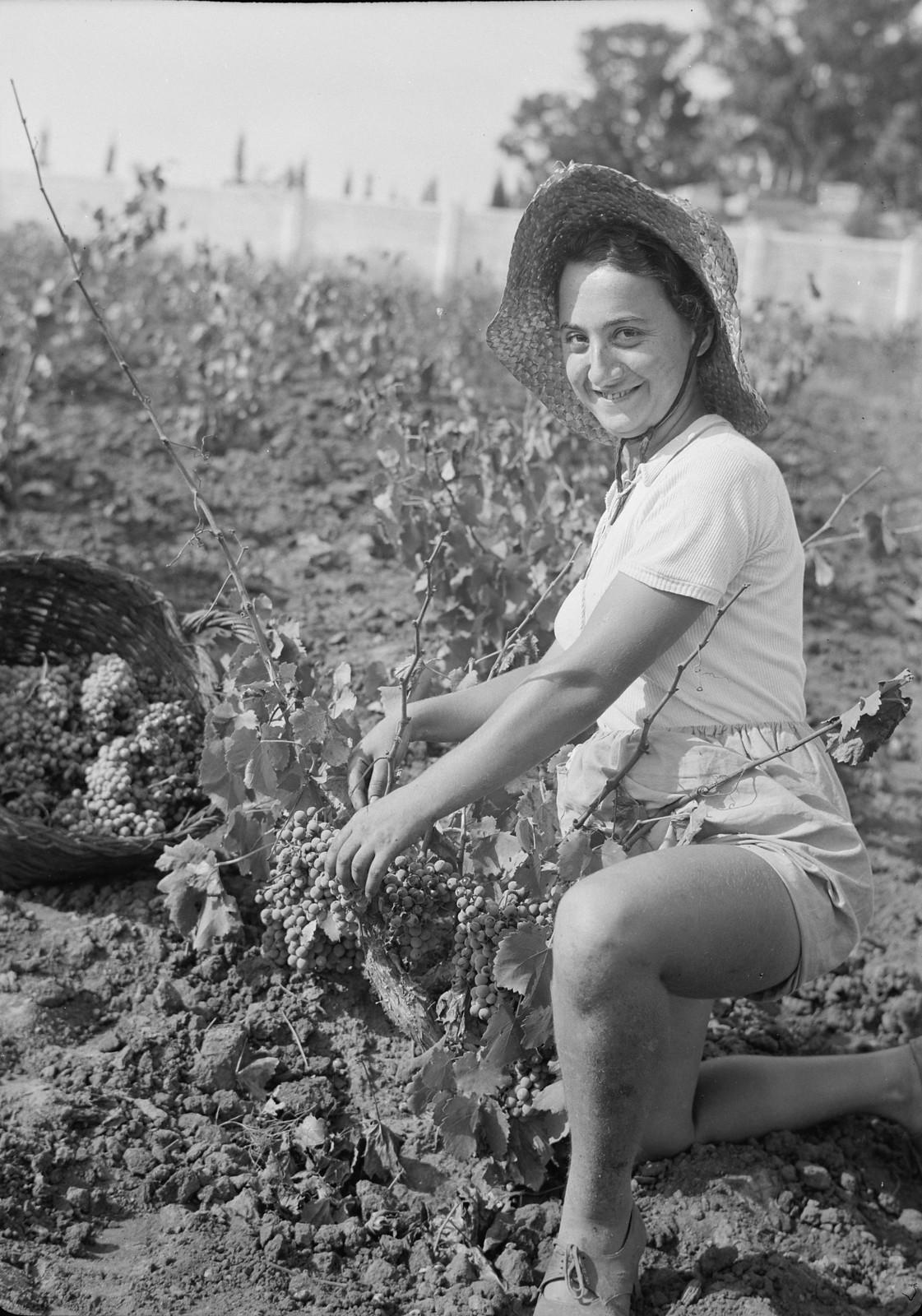 01. Сборщица винограда, европейская девушка-иммигрантка