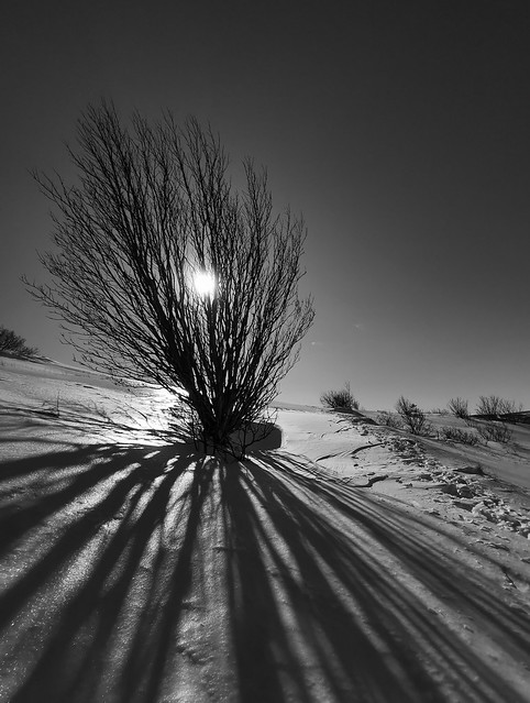 Winterscape in BW (Many thanks for the 3 Million + views, awards and faves. Cheers!!)