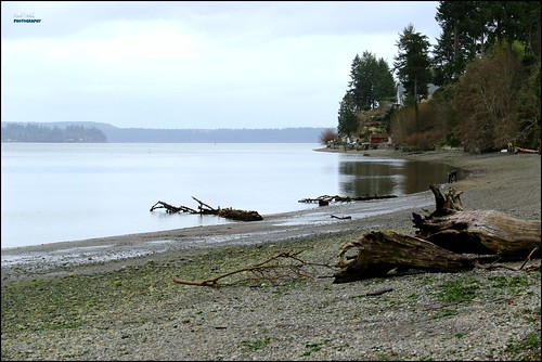 beach driftwood shoreline trees water waterscene waterscape landscape pugetsound parks nature tomiestatepark olympia washington canon picmonkey