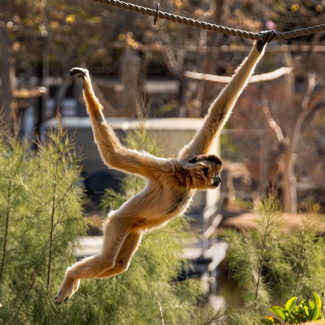 7M301377_monkey