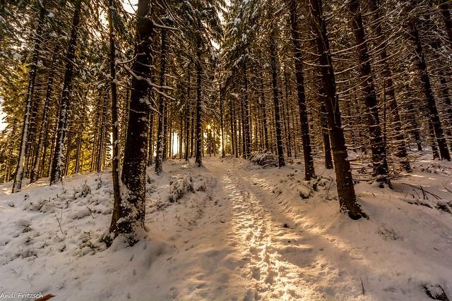 Morgens im Winterwald