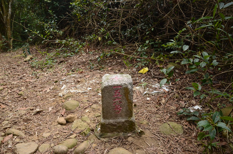 員屯山三等三角點(# 156 Elev. 339 m)