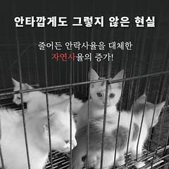 [유기동물] 고통사 방지 활동 ① 유기동물 보호소 '자연사'의 비밀