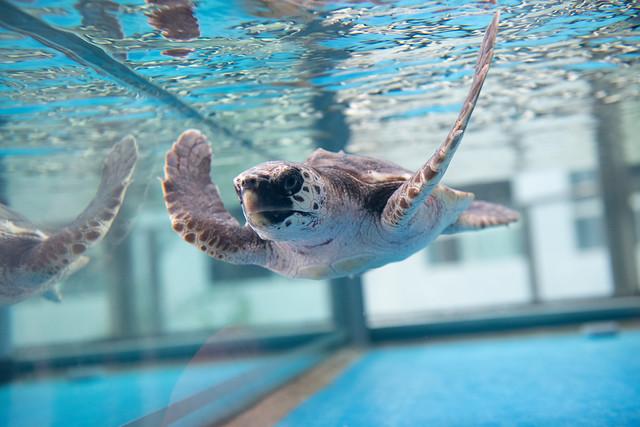 20200117 Nagoya Aquarium 4