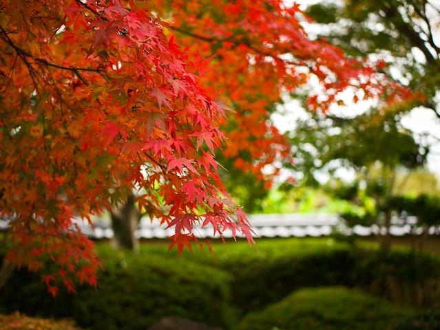 447-Japan-Kitsuki