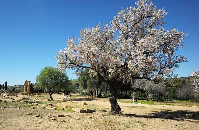 Tempio dei Dioscuri, Valle dei Templi, Agrigento, Sicily, February 2020 040