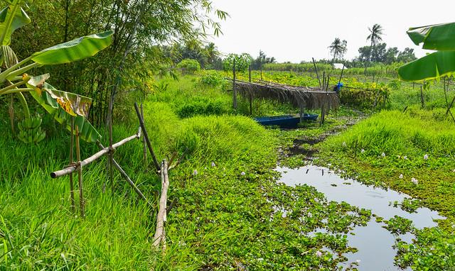 Rural scenery of Mekong Delta
