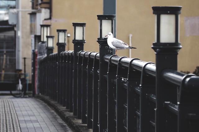 Seagull on the bridge