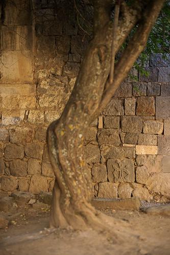 halidzor syunik armenia tatev monastery yard tree cross