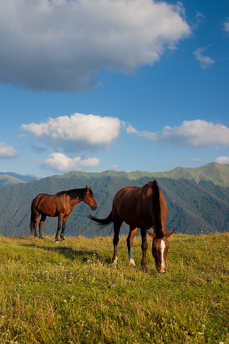 tusheti zemoomalo kakheti georgia omalo horse two afternoon rural village grazing