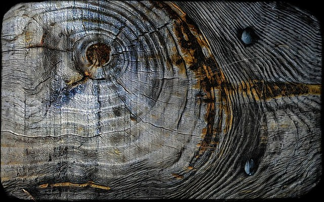 L'œil de bois.