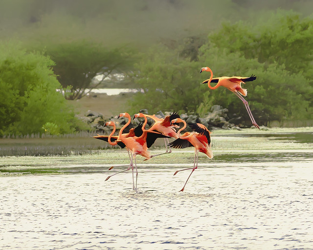 Flamencos aterrizando