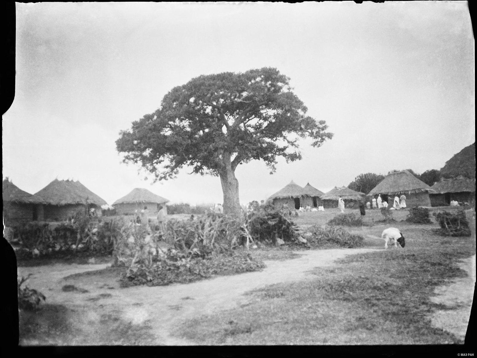 04. Дерево, в котором живет добрый дух деревни (дух - Аулия)