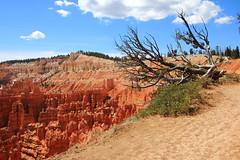 Tree and Canyon Rim - Bryce Canyon National Park, Southwestern Utah