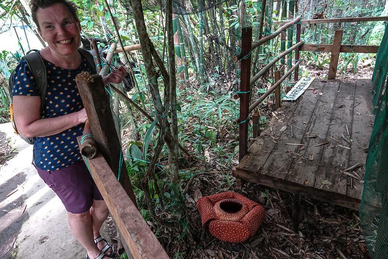 Rafflesia location