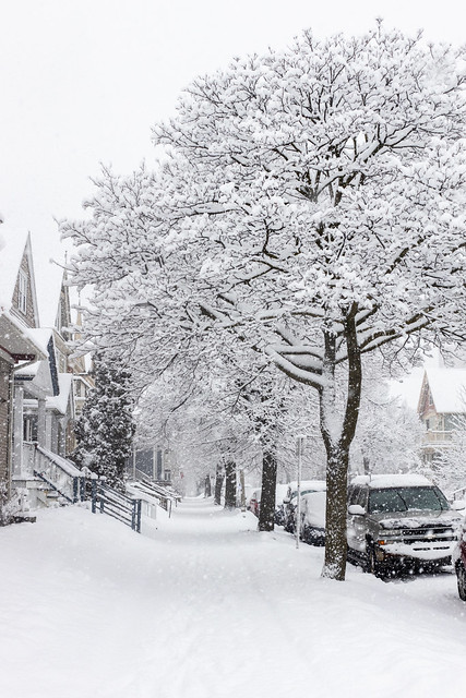 Frosty Blizzard