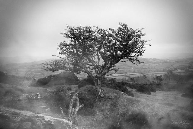 Nr Middle Tor - Dartmoor