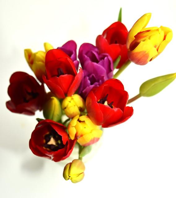 Tulips - Feb 2020