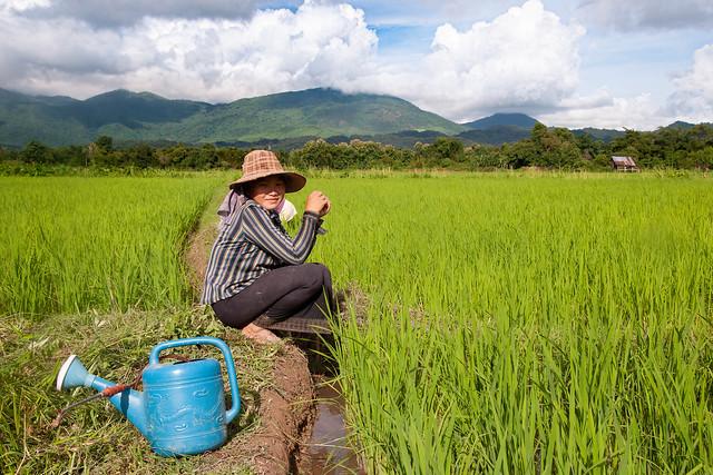 Aux champs Vang Vieng Peasent Laos