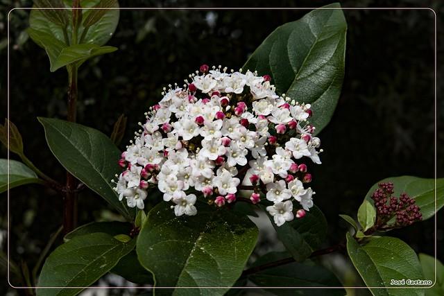 IMG_2111_Flower