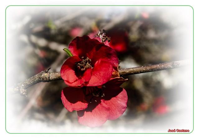 IMG_2096_Flower