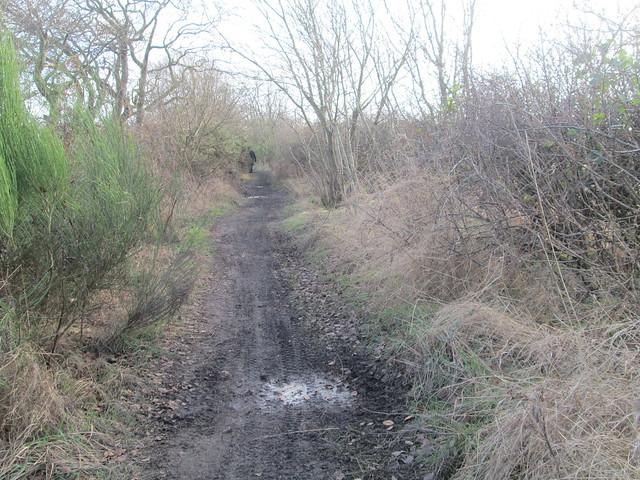 farm track, Fife