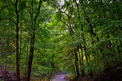 The Trees Rise Above Me Like a Kindred Soul (Mammoth Cave National Park)
