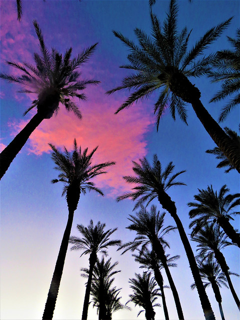 pink cloud and palm trees