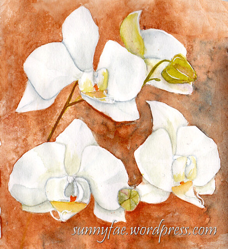orchids on an orange background