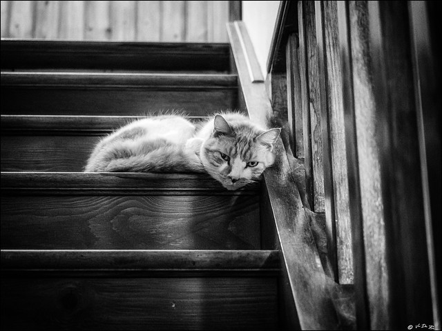 N'imaginez même pas monter!!...  /  Don't even think going up the stairs!!...