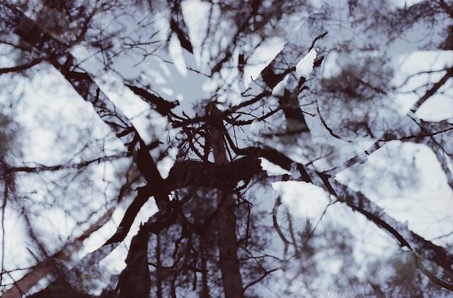 Trees double exposure