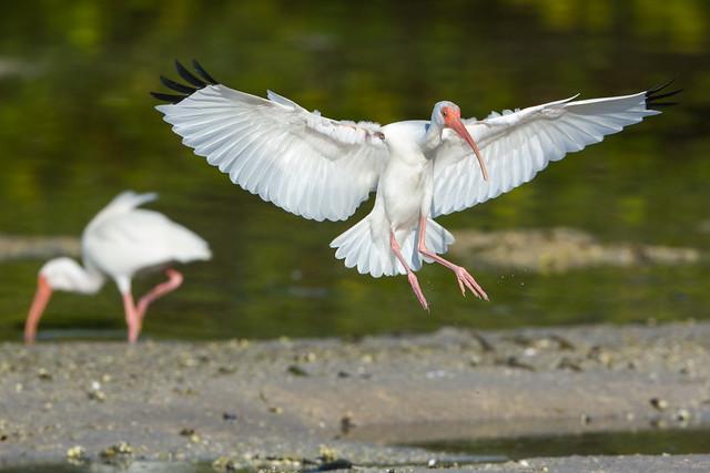 Gliding in
